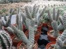 Le nostre piante-54