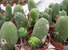 Le nostre piante-58