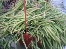 Le nostre piante-64