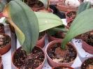 Le nostre piante-70