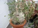 Le nostre piante-73