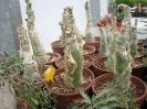 Le nostre piante-74