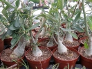 Le nostre piante-75