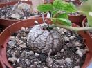 Le nostre piante-79