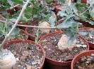 Le nostre piante-80