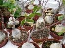 Le nostre piante-81