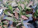 Le nostre piante-82