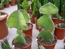 Le nostre piante-85