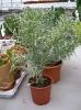 Le nostre piante-86