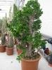 Le nostre piante-87