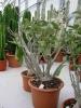 Le nostre piante-88